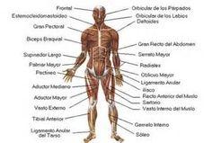 Estructura General <b>del</b> <b>Cuerpo</b>…