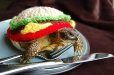 Tortoise dressed up as a hamburger // Kate Bradley // Mossy Tortoise