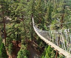 There are 3 sky bridges to experience on the canopy walk. This one...and this is the external link https://bigpinesziplines.com/tour/canopy/