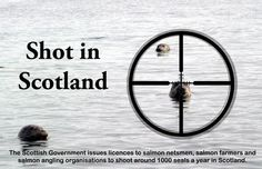 LAST DAY TODAY 5/5/14! SIGN & REPIN! One last push for #Scotland's #seals. Can be signed OUTSIDE of the UK #SaveScotlandSeals PETITION LINK HERE: http://www.scottish.parliament.uk/GettingInvolved/Petitions/sealshooting .. pic.twitter.com/AGvGF6GyI8