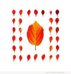 """Autumn Patterns"" by Jennifer Booher"
