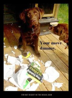 Dog Training irony