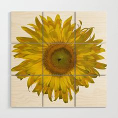 Yellow Sunflower Blossom Wood Wall Art Brighten the walls of your home, apartment or dorm room with this pretty print. Sunflower Gifts, Yellow Sunflower, Wood Square, Baltic Birch, Wood Wall Art, Dorm Room, Walls, Pretty, Artist