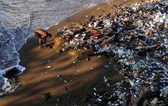 Sul bagnasciuga. Comunque raccogliere.  (Volontario sulla spiaggia di Santo Domingo nel giorno di pulizia annuale della costa)  Photograph: Ricardo Rojas/Reuters