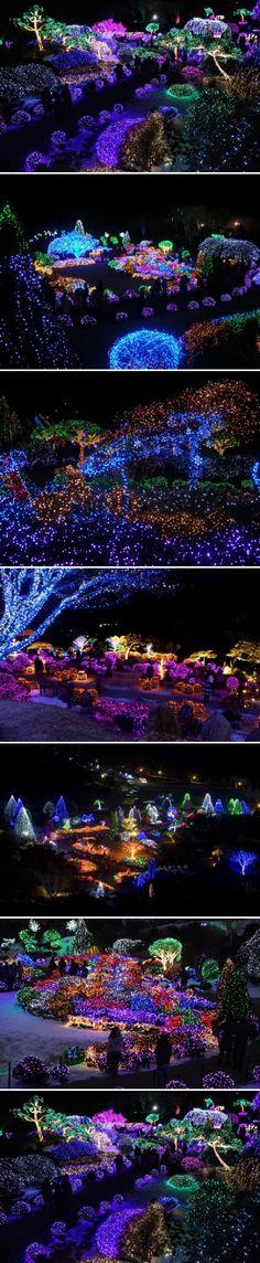 Christmas Festival, Garden of Morning Calm in South Korea                                                                                                                                                                                 More