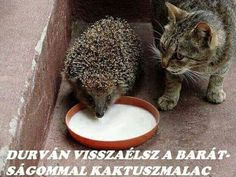 you share your milk with him and nothing else matters Animals And Pets, Funny Animals, Cute Animals, Animal Pictures, Funny Pictures, Interesting Animals, Son Luna, Jokes Quotes, Exotic Pets