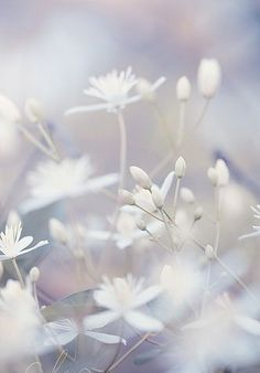 Flowers white soft colors 36 ideas – Best Home Plants White Flowers, Beautiful Flowers, White Aesthetic, Jolie Photo, Arte Floral, Shades Of White, Soft Colors, Colours, Pretty Pictures