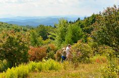 Pick wild blueberries at Grayson Highlands State Park in Virginia