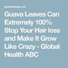 Guava Leaves Can Extremely Stop Your Hair loss and Make It Grow Like Crazy - Global Health ABC Guava Leaves, Like Crazy, Prevent Hair Loss, Your Hair, The 100, Canning, Health, How To Make, Health Care