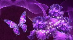 Purple Iris Beauty wallpaper free