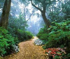 Bok Tower gardens, Lake Wales, Florida @Sam Pryor