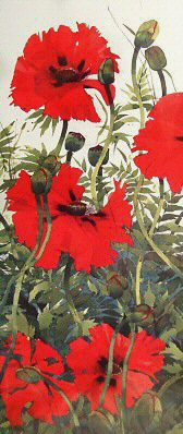 Papaver Orientale by Mary Ann Rogers