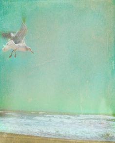 Vintage Seagull Beach Art Print - Blue Green Aqua Pastel Ocean Beach House Wall Art Photograph    8x10 Photograph    This photo was taken and
