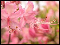 pink by _poseidon_, via Flickr