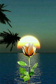 Beautiful Love Pictures, Beautiful Photos Of Nature, Beautiful Moon, Amazing Nature, Beautiful Flowers Wallpapers, Beautiful Rose Flowers, Beautiful Nature Wallpaper, Black Art Pictures, Sunset Pictures