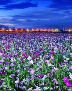 Field of wild flowers