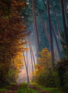 November Breath - Photography by Daniel Herr A forest of these trees is a spectacle too much for one man to see. Autumn Tale, Autumn Forest, Autumn Nature, Beautiful World, Beautiful Places, Beautiful Pictures, Pastel, Magical Forest, Walk In The Woods
