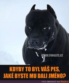 Kdyby to byl váš pes, jaké byste. Picts, Shadowrun, Funny Jokes, Psi, Pitbull, Memes, Nerf, Dogs, Cute
