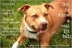 Get to know a Real Pit Bull by Italian-Pitbull.deviantart.com on @deviantART