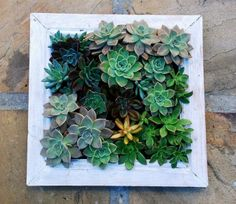 Introduce low-maintenance succulents into your home with these Living Frames.