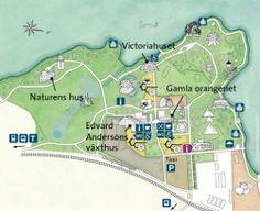 Karta över Bergianska trädgården. Illustration: Veronica Lendel