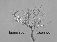 Branch Out - Connect: by YES Psychology & Consulting. photo taken by Kash Thomson. www.yespsychology.com.au