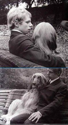 Afghan Hounds look like women from the back. Haha
