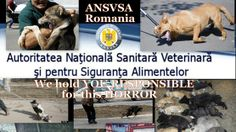 More signatures needed Suspend the dog catching activity in the entire country and the killing of dogs untill ALL the requirements of the law have been fully imple...