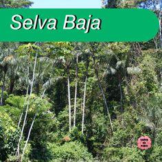 48 Ideas De Tareas De Thiago 2020 Selva Peruana Selva Peru Traje Tipico De Peru