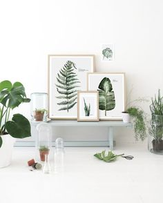 INTERIOR TREND: BEAUTIFUL BOTANICS | THE STYLE FILES