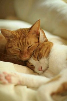 These cute kittens will make you amazed. Cats are wonderful friends. Cute Kittens, Cats And Kittens, Kitty Cats, I Love Cats, Crazy Cats, Baby Animals, Cute Animals, Cat Couple, Sweet Couple