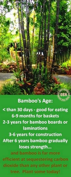 """If you want to know more about bamboo, why not follow our """"All Things Bamboo' blog? You'll find it and links to our other DIY blogs at http://bamboo.theownerbuildernetwork.co/ If you've got something to say, why not also consider blogging at OBN?"""