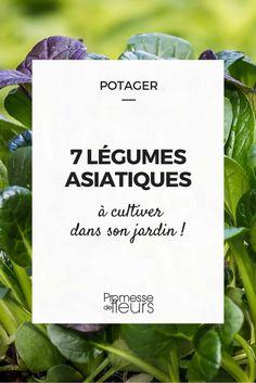 Les bonnes raisons de cultiver son potager sont nombreuses et la possibilité de faire pousser des légumes originaux, qu'on ne trouve pas facilement dans le commerce, en fait partie. Parmi...
