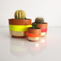 Cactus neón por  @CactilCactusLand