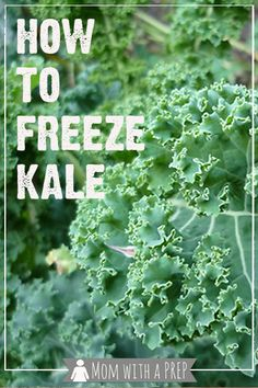 Mom with a PREP | When you have an overabundance of kale from a bumper garden crop or a CSA basket or a great sale at the grocers, what do you do with all that extra kale if you aren't dehydrating it? You can freeze it raw, especially if you're using it for smoothies!