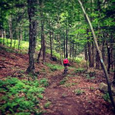 Fast and flowy section at Mt. Ascutney, Vermont.