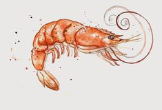 Amy Holliday Illustration prawn to be wild Food Drawing, Painting & Drawing, Watercolor Paintings, Watercolours, Underwater Art, Fish Drawings, Cartoon Sketches, Nautical Art, Watercolor Animals