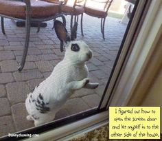 Bunny Shaming: Daily Shame: Don't get up, I'll let myself in