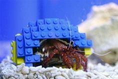 Un Bernard l'Hermite avec une carapace en Lego
