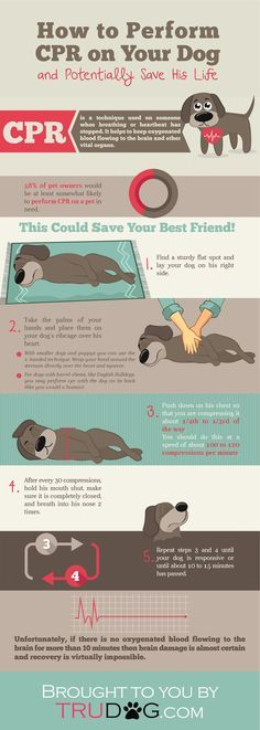 [INFOGRAPHIC] How to Perform CPR on Your Dog trudog.com/...