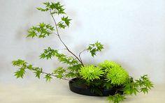 Koto Jazz 31: Ikebana (Art of Flower Arrangement)