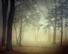 Inner Glow - Autumn, Fall Photography, Fog, Forest, Trees, Woodland, Mysterious, Mist, Nature, Haunting, Halloween, Earth Tones