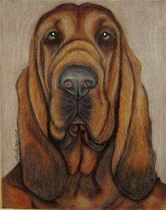 Most loveable dogs in the world Bloodhound Dogs, Basset Dog, Basset Hound, Animals And Pets, Cute Animals, Fall Drawings, St Hubert, Baby Panda Bears, Dog Portraits