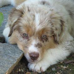 Kimis Freund Cody vom www. Corgi, Puppies, Animals, Cat Food, Dog Food, Farm Animals, Animales, Puppys, Animaux