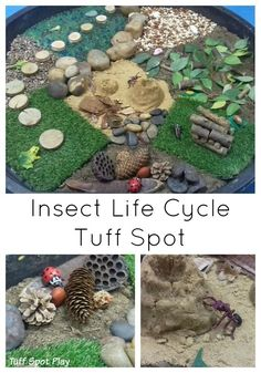 Insect Life Cycle Tuff Spot. Explore the life cycle of the ant, ladybird and frog in this large sensory bin.