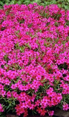 Wonderful Types Of Urban Gardening Ideas. Sensational Types Of Urban Gardening Ideas. Garden Shrubs, Garden Plants, Plants That Like Sun, Beautiful Gardens, Beautiful Flowers, Pink Perennials, Fast Growing Plants, Home Vegetable Garden, Container Plants