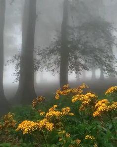 Beautiful Nature Scenes, Beautiful Nature Wallpaper, Amazing Nature, Beautiful Landscapes, Aesthetic Photography Nature, Nature Aesthetic, Landscape Photography, Nature Photography, Imagen Natural