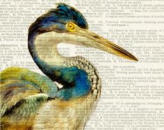 Heron - vintage watercolor printed on page from old dictionary. $12.00, via Etsy.