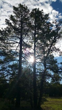 Sun caught in the branches grip! Branches, Celestial, Sunset, Nature, Plants, Outdoor, Outdoors, Naturaleza, Sunsets
