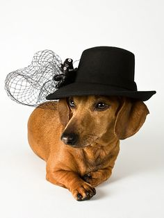 I think this is funny because it would have driven my mom nuts to see a dog in such a beautiful hat!